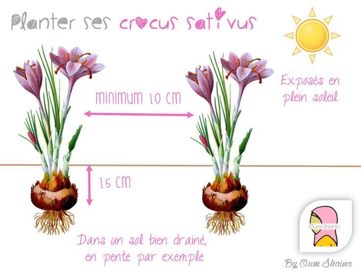 1000+ ideas about Crocus Sativus on Pinterest.