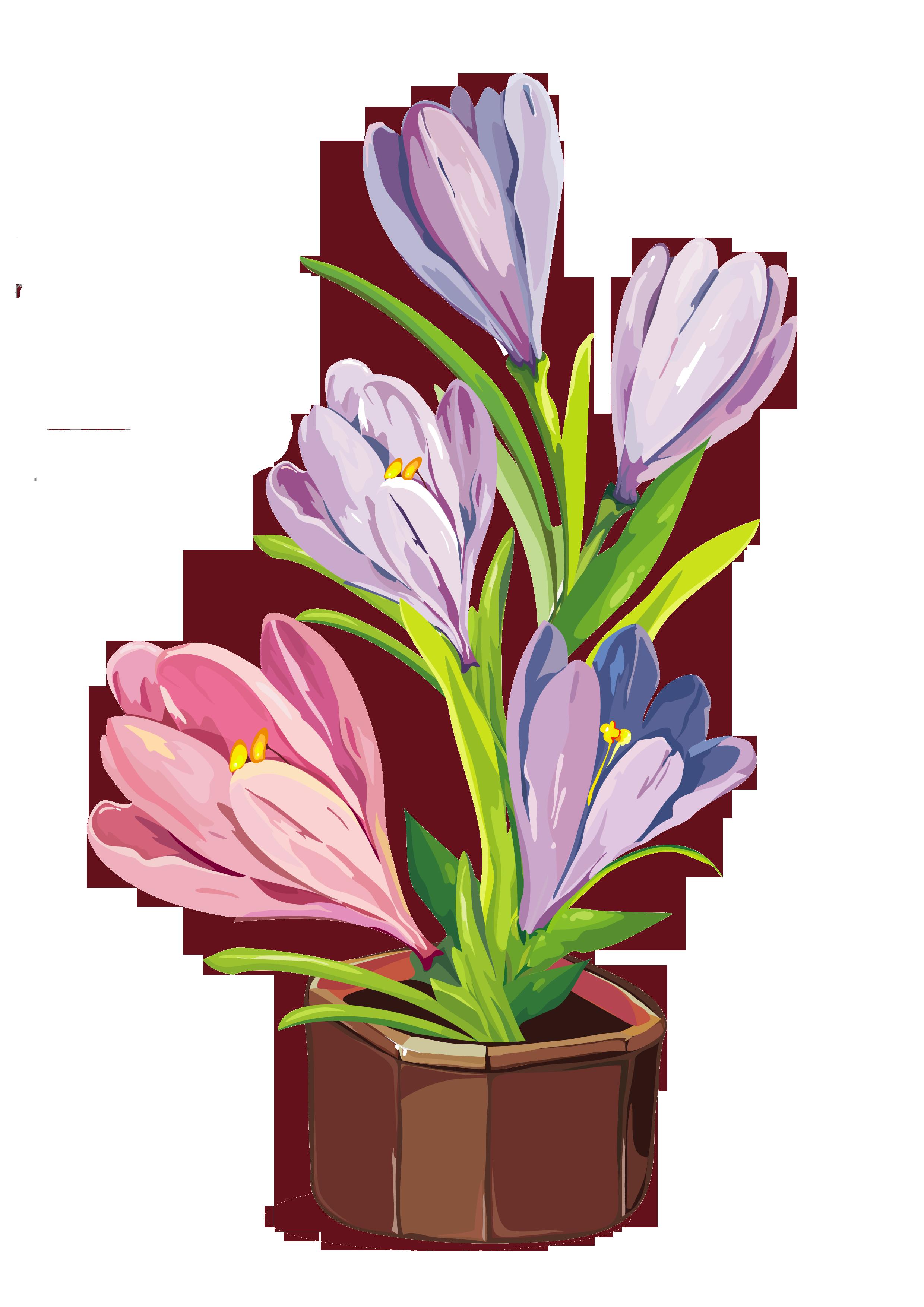 Spring Crocus Pot PNG Clipart.