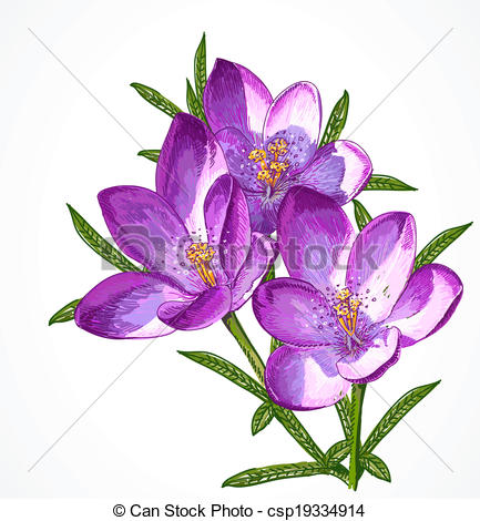 Vector Clip Art of Vector Crocus Spring Flowers for your design.