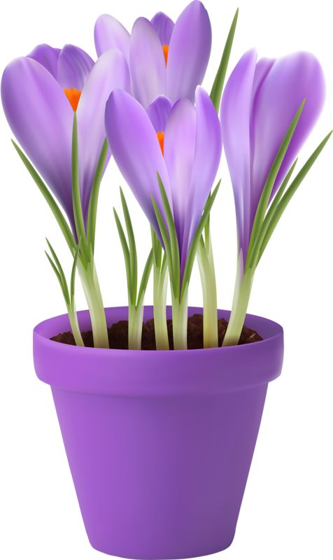 Clip Art of beautiful plants for the spring garden.