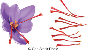 Saffron crocus Clipart and Stock Illustrations. 332 Saffron crocus.