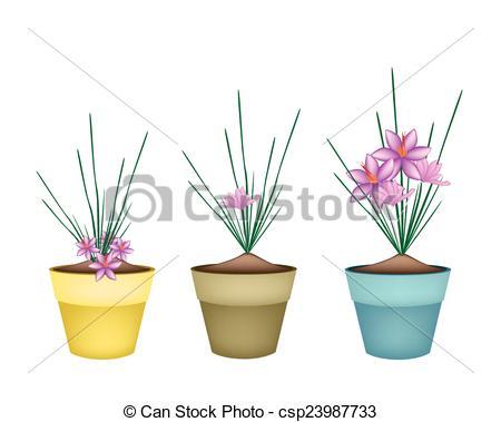 Vectors of Crocus Sativus Plants in Ceramic Flower Pots.