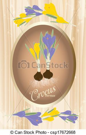 Clip Art Vector of Crocus vernus.