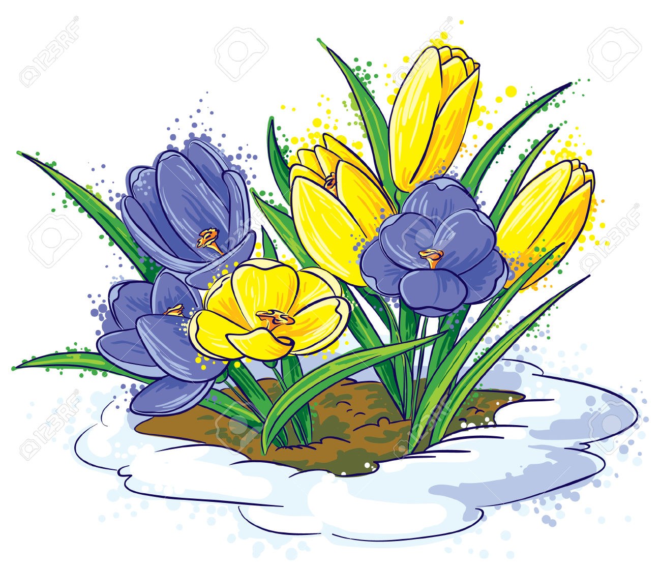 crocuses clipart clipground