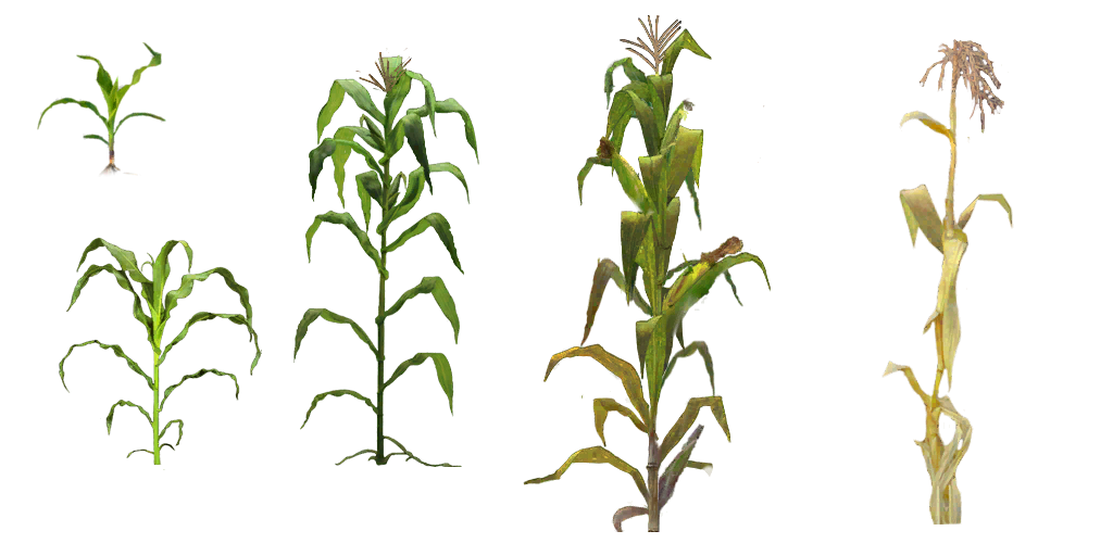 Crops clipart corn crop, Picture #839041 crops clipart corn crop.