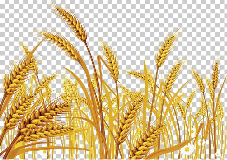 Download for free 10 PNG Crops clipart wheat Images With Transparent.
