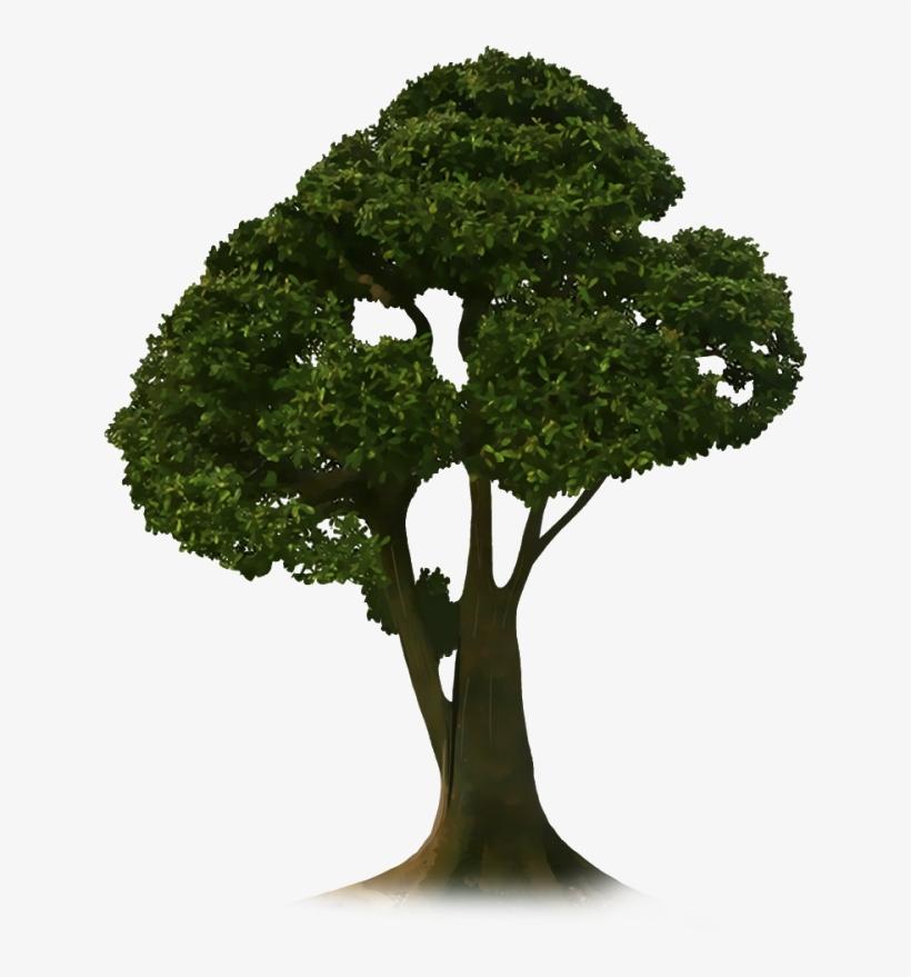 Crop Tree Png.