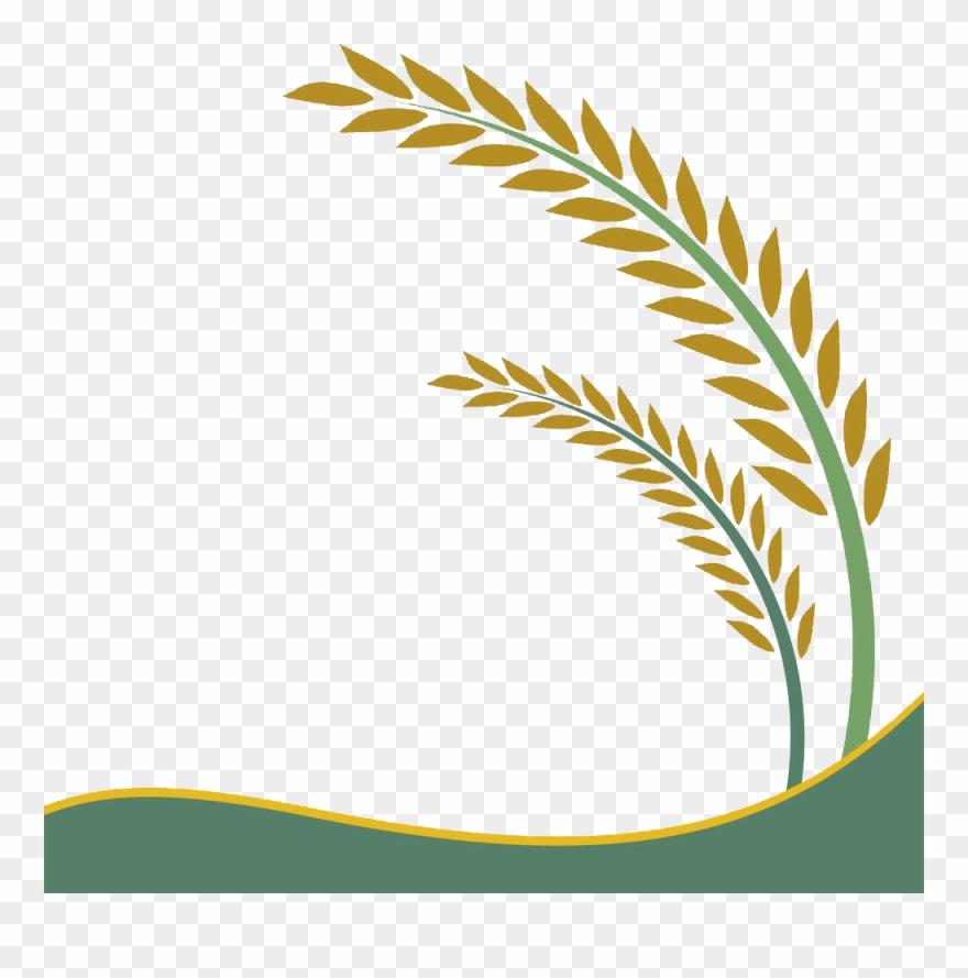 Paddy Field Oryza Sativa Rice Crop Clip Art.