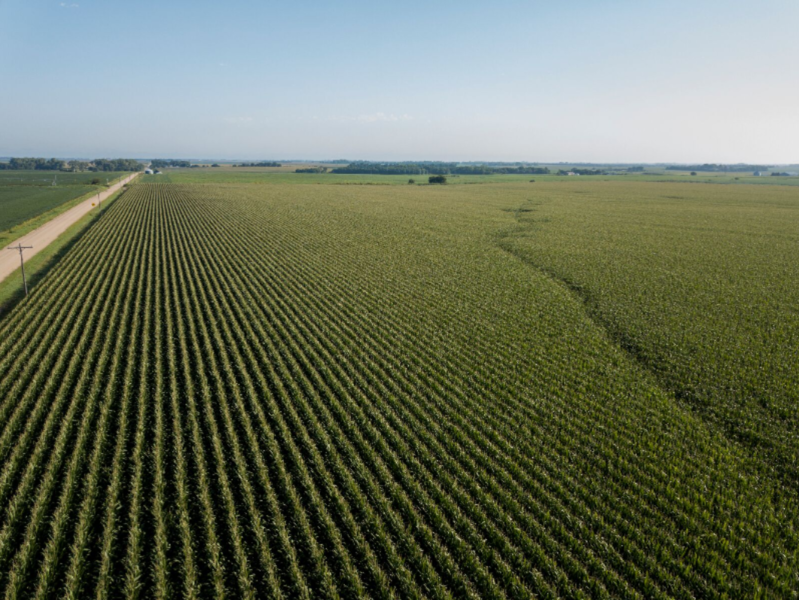 Scouts See Improved Crops as They Move Deeper Into The Corn Belt.