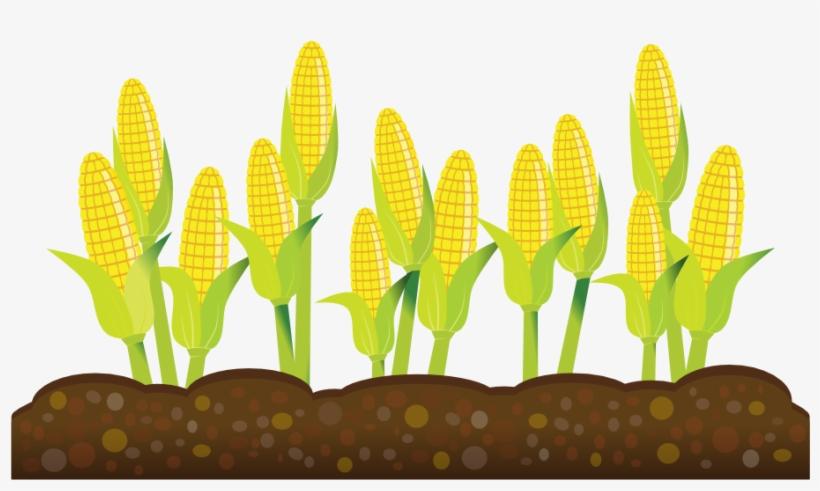 Corn Plant Clipart.