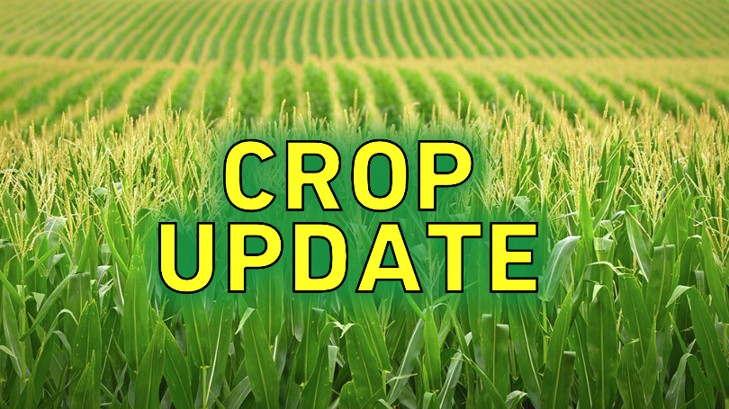 Illinois Corn, Soybean Crops Improving Significantly.