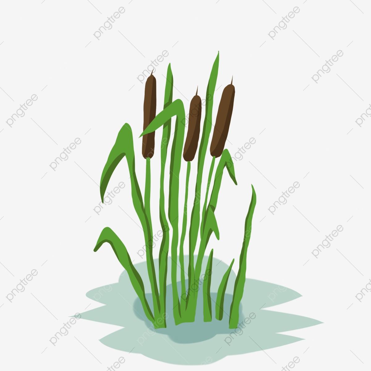 Green Plant Plant Leaves Leaf, Green Leaf, Grass, Crop PNG.