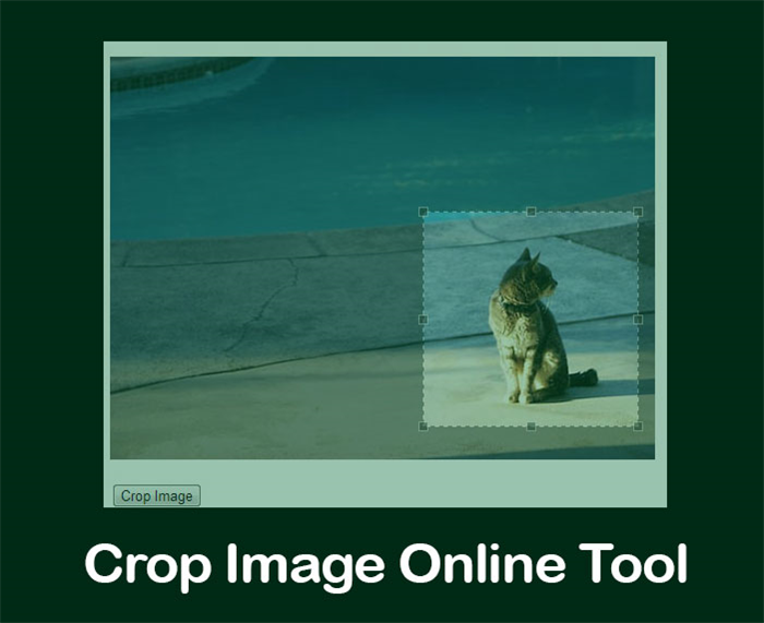 Online Crop Photo Tool [Photo Resizer] Free Pictures Trimmer.