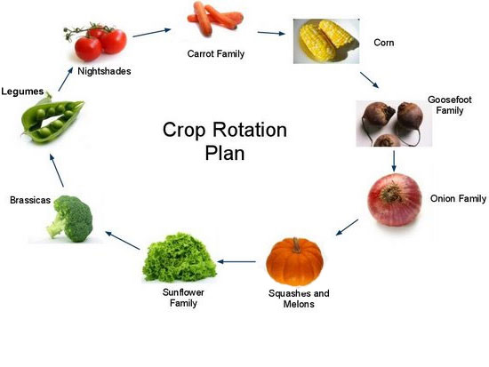 Crop Rotation Tips: What crops to follow up with.