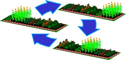 Impacts of the Agriculteral Revolution.