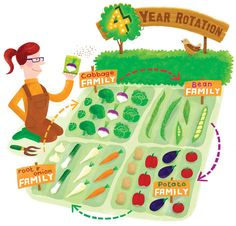 Crop rotation clipart.