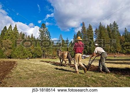 Stock Photo of Using draft horse to plow pasture into cropland.