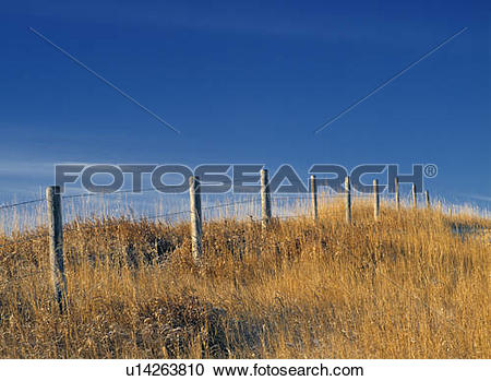 Stock Photography of Barbed wire fence and cropland near Linden.
