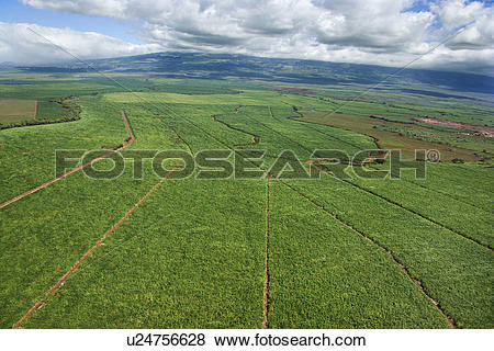 Pictures of Aerial of irrigated cropland in Maui, Hawaii u24756628.