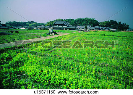 Stock Photography of Cropland u15371150.