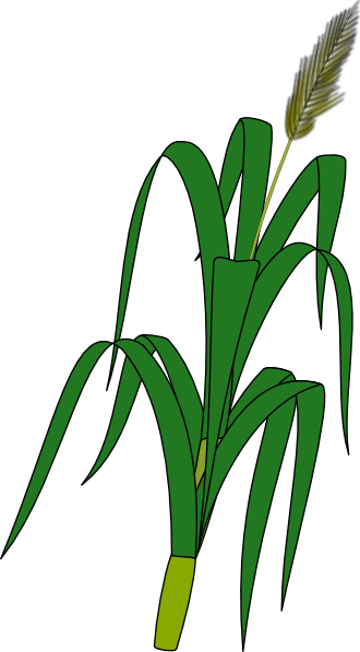 Wheat Crops Clip Art.