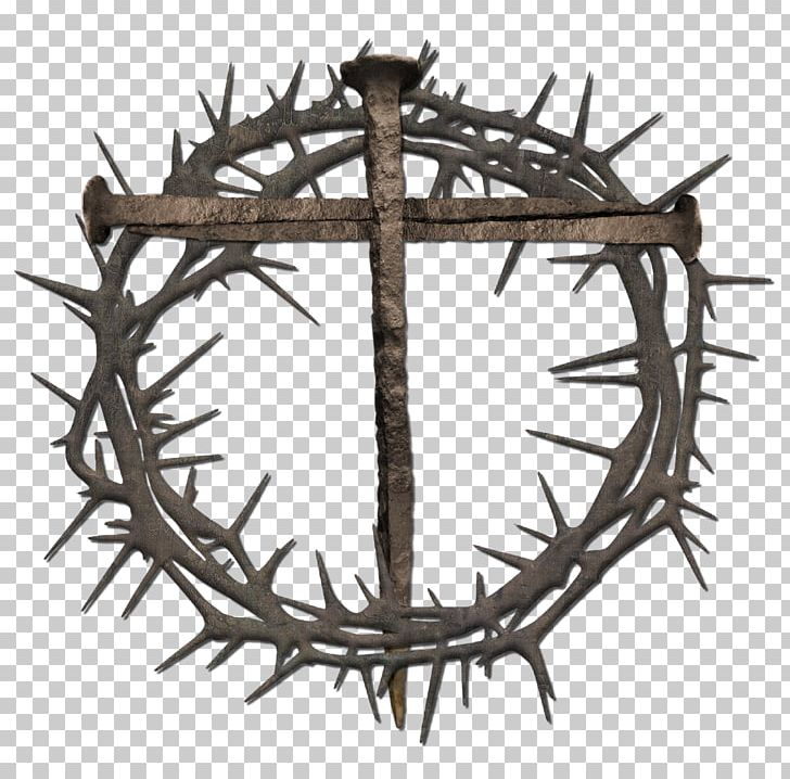 Crown Of Thorns Thorns PNG, Clipart, Antler, Branch, Child.