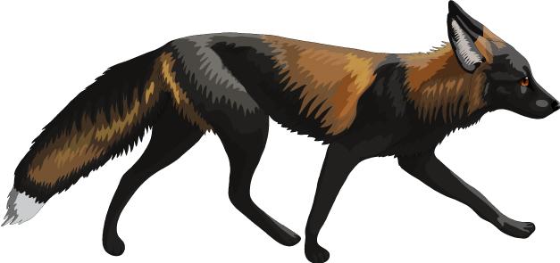 cross fox.