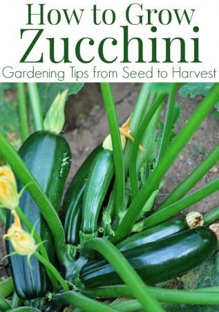 1000+ ideas about Zucchini Plants on Pinterest.