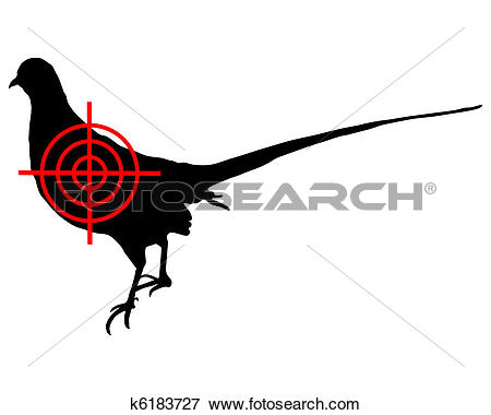 Stock Illustration of Common Pheasant crosslines k6183727.