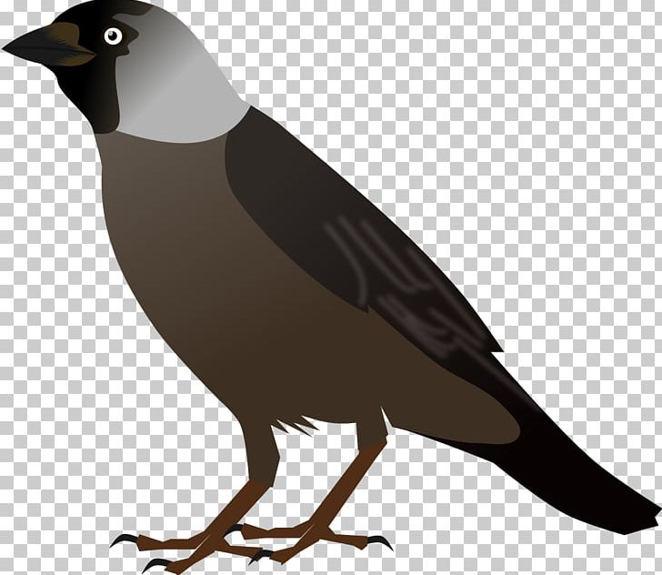 Crows Bird Drawing PNG, Clipart, Animals, Beak, Bird, Bird.