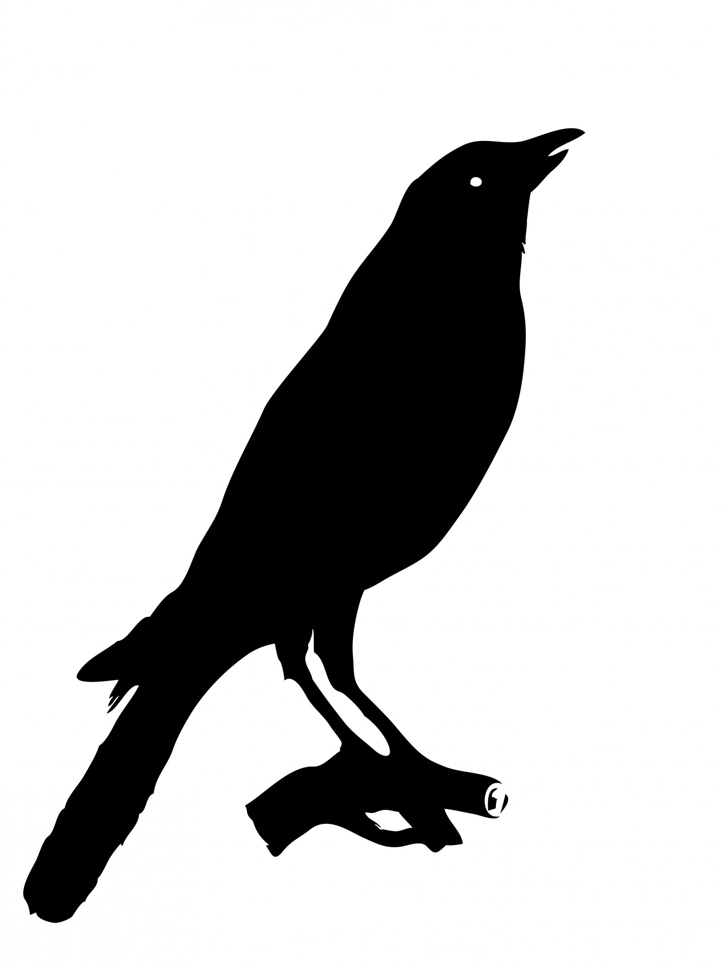 Bird Crow Clipart Free Stock Photo.