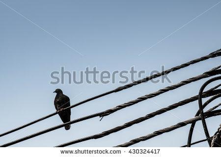 Crow Pole Stock Photos, Royalty.