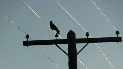 1000+ images about crow on a wire on Pinterest.