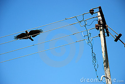 Crow On An Electric Wire Stock Photo.