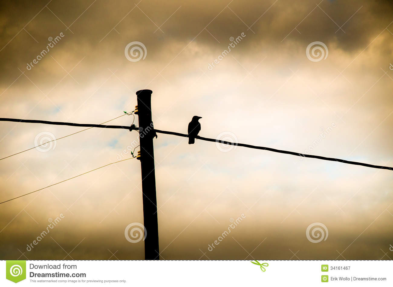 Crow Sitting On A Power Line Royalty Free Stock Photography.