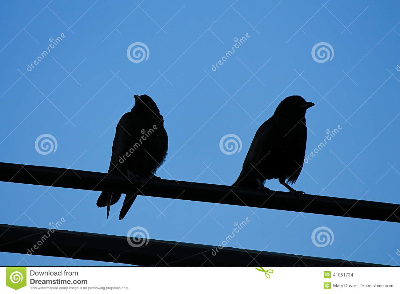 Crows On Electrical Wire Stock Photo.