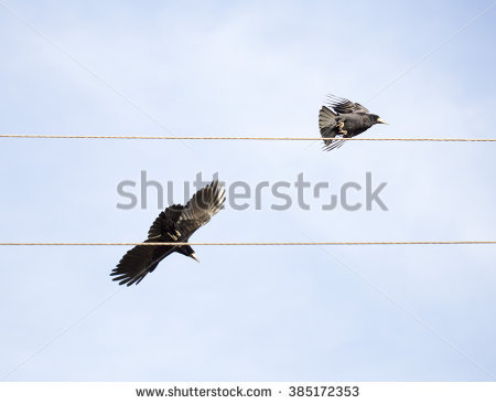Crow on electric wire clipart #14
