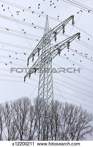 Stock Photography of Electric pylons surrounded by flock of crows.
