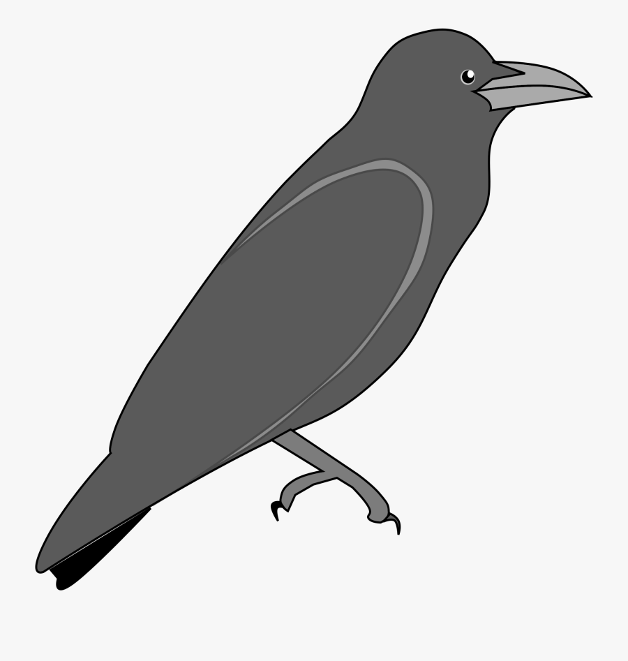 Raven Png.