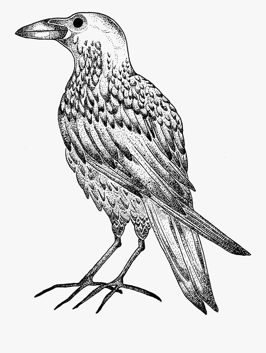 Transparent Crow Clipart Black And White.