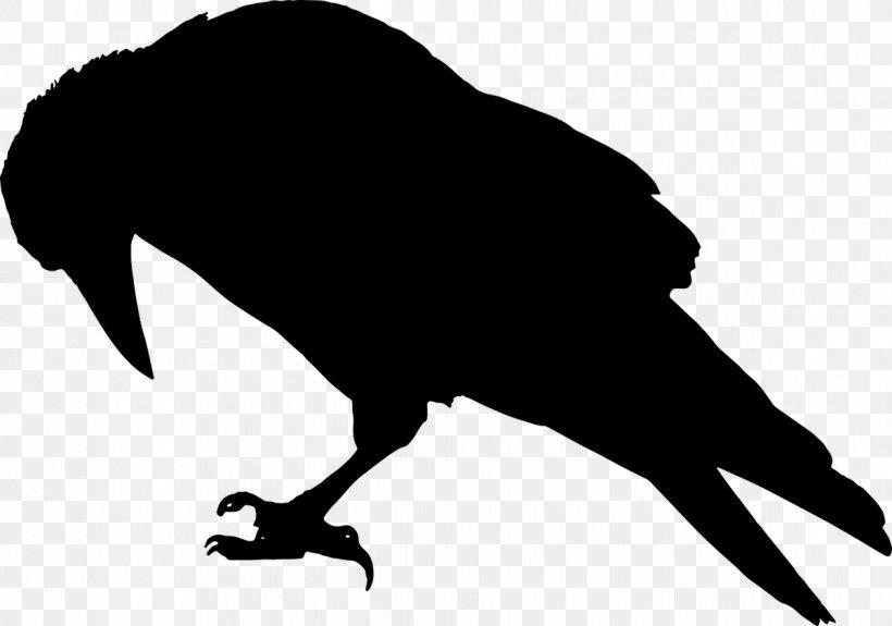 Common Raven Crow Silhouette Clip Art, PNG, 1200x842px.