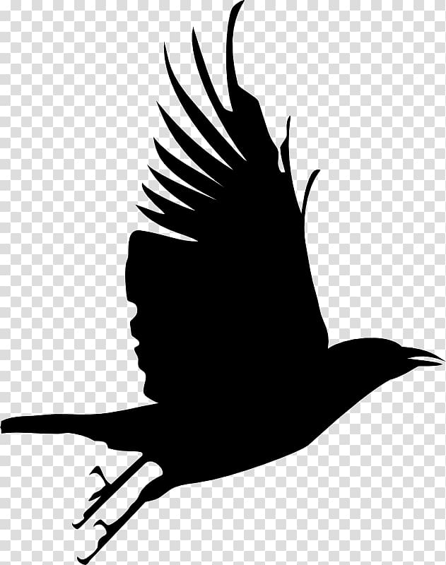Bird Crow Silhouette , raven transparent background PNG.