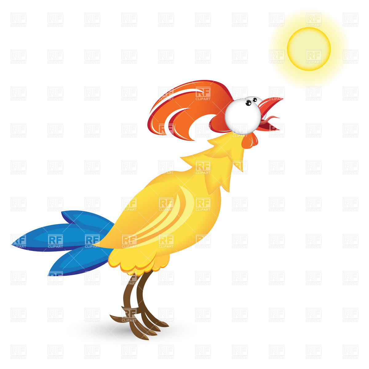 Crowing rooster and morning.