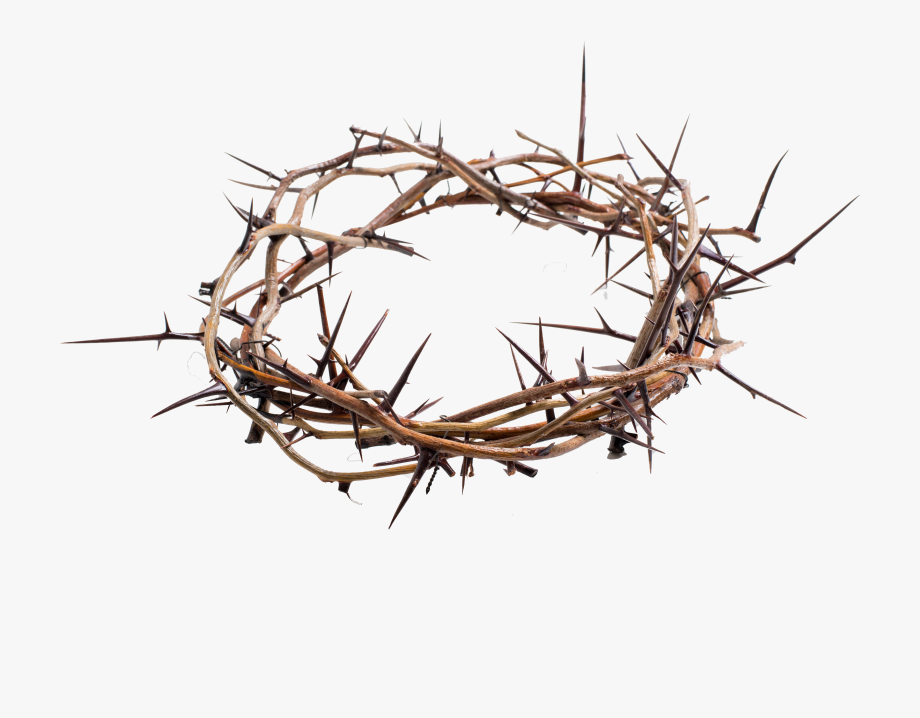 Crown Of Thorns Png Transparent.