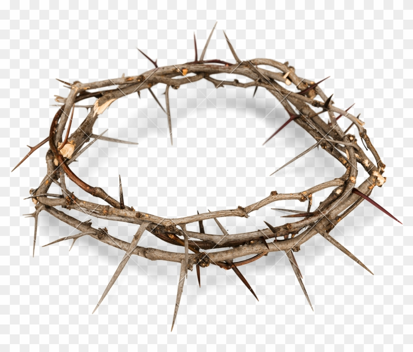 Crown Of Thorns Png Free Background.