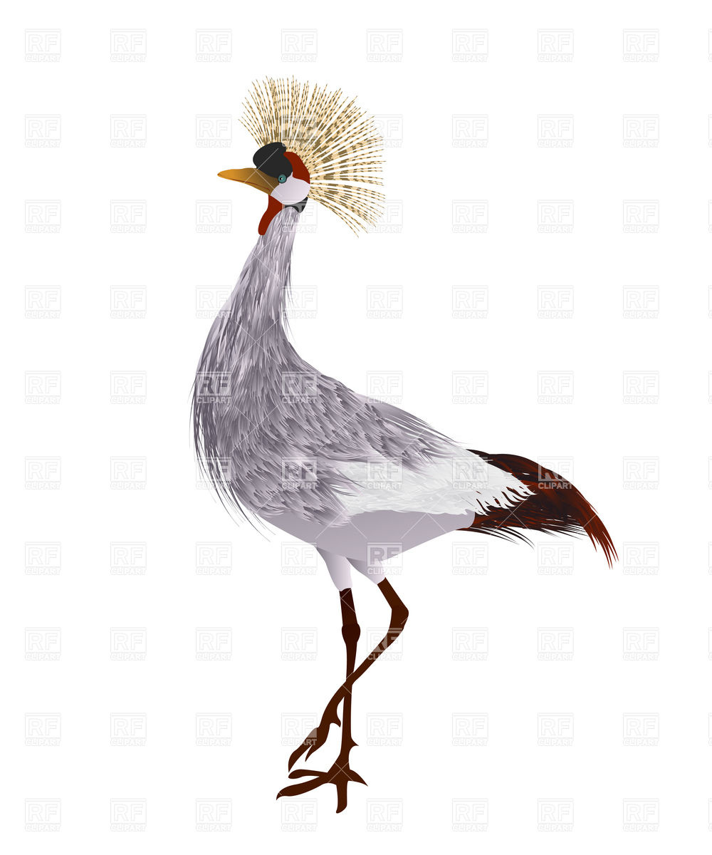 Grey crowned crane Vector Image #16903.
