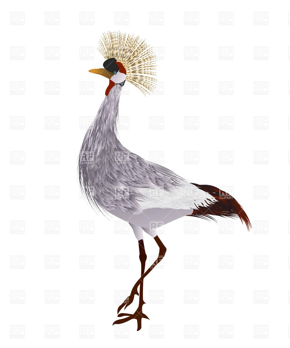 Grey crowned crane Vector Image #16903.