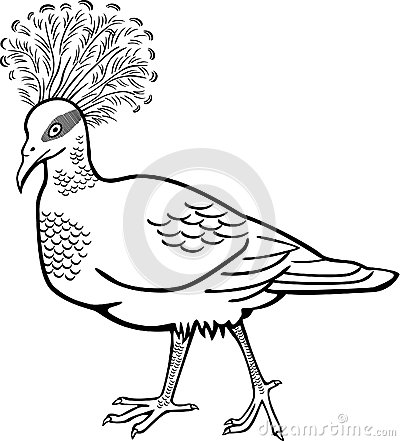 Victoria Crowned Pigeon Goura Victoria Stock Illustrations.