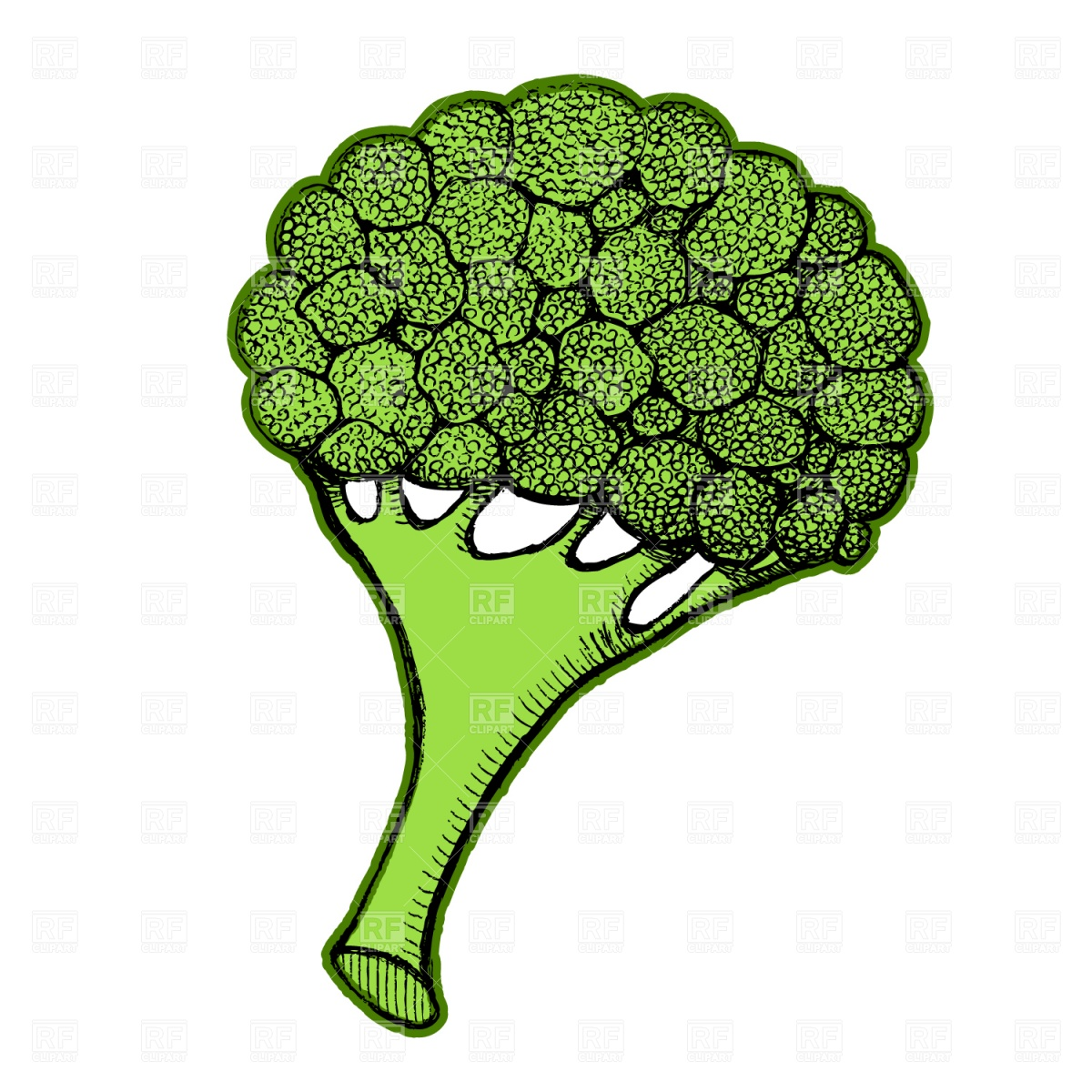 Broccoli Vector Image #1541.