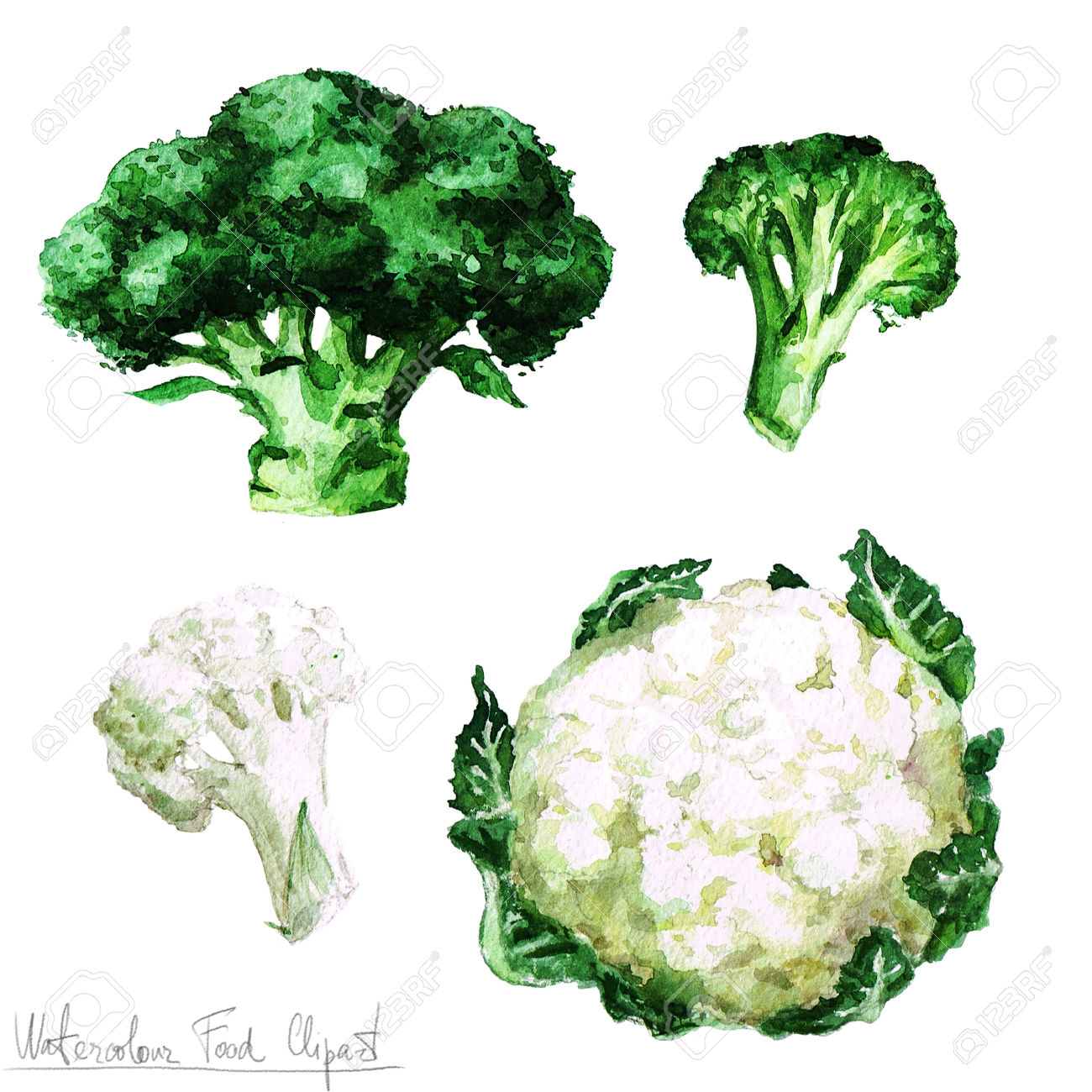 Watercolor Food Clipart.